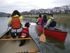 那珂川でカヌー! 今年の白石川一目千本桜お花見カヌーは 4月19・20日頃を予定しています 両岸に見える桜並木の後ろに