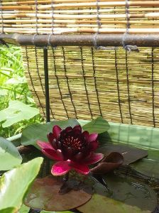 日々・・レスなしトピ ちょっとだけ暑さにやられたかな。 私としたことが・・。  世話の必要な植物や生き物がいる。 なにかあ