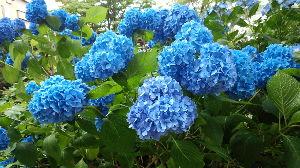 可愛いイラスト募集ლ(╹◡╹ლ) 花は好きですか?