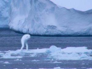 こんな○○はいやだ(アニメ版) 【こんな南極はいやだ 9】  南極行きは『川口浩探検隊』として企画されたもので、キマリたちの役割は色