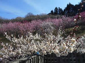 兵庫わびさびの道 弐 こんにちは らくちゃんデス、 寒の戻りか まだ 春遠し 先日 奈良県の梅林へ行って来ました。