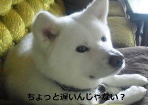 4974 - タカラバイオ(株) なぁー