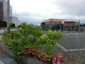 出来るうちに畑仕事をしたい 福岡にも雨が降りましたか。よかったですね。 降りすぎなければ、なお良いですが。   昨年うちでは、こ
