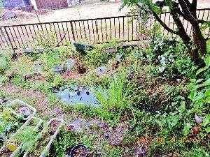 出来るうちに畑仕事をしたい    未明からの嵐が過ぎ去りました。小池は満々と水を湛え、栄華を誇ったカキツバタは無残にも倒れ、我が