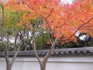 出来るうちに畑仕事をしたい こんにちは♪  東京では、台風による塩害で紅葉しないといわれていましたが 紅葉が とってもきれいです