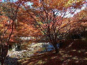 バイク好き「大人の遠足~」関西発 写真:川の両岸に 紅葉が広がっています。