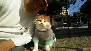 8031 - 三井物産(株) 株猫ジョージ君がコメント出しました。 上海、後場急伸で東京市場も買い戻しニャンコ。 NY市場は堅調に