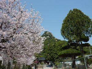 山歩きしませんか 3月最終日の山歩き  連日の晴天続きと春の陽気に誘われて3月31日(土)に「右田ヶ岳」の山歩きに行っ