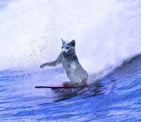 私は、わたしを好きですか!? http://www.youtube.com/watch?v=8eecC5Hnlb8  湘南の海でサ
