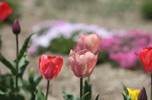 羽後の国から 一斉に咲く花々