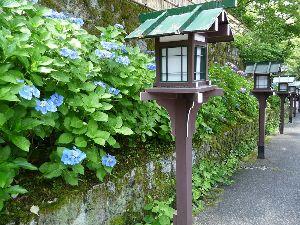一枚の写真から 京都の旅から一枚投稿します。  京都は八坂長楽寺の紫陽花です。