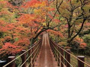 落ちこぼれ集まれ・・・・ 紅葉の季節になりました。