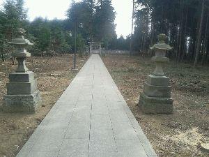 落ちこぼれ集まれ・・・・ 暫くぶりに神社に行ったら杉の木が切られてしまいました。 花粉症対策かな?