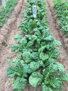 家庭菜園してる方 友達になってください。 こんにちは。  今日は昨日と違い朝から冷たい雨が降っています。 芽が出ないじゃがいも沢山あります、数
