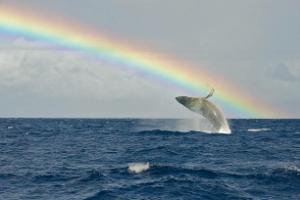 4563 - アンジェス(株) アンジェスにクジラが迷い混んで来ました?  JPモルガン・セキュリティーズ 434,168株 「日本
