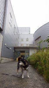 6090 - ヒューマン・メタボローム・テクノロジーズ(株) HMT応援団Meeting(株主総会)会場、TMC(鶴岡メタボロームキャンパス)のレクチャールームへ