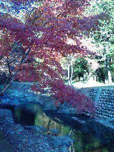 岐阜愛知平日ライダー。 今日バイク屋の帰りに秋を撮ってきました。  しかし秋はもう終わりですね♪