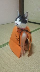 日々の癒しに こんばんは 猫ハロウィンだよ