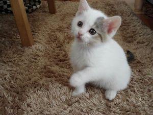野良猫、救済できないものか。 みなさん、おはようございます。