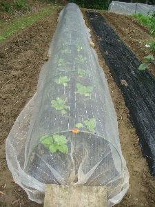 家庭菜園 始めました ^^v 【雨よけネット】  青虫駆除の有機栽培用 害虫駆除剤を使っているので。。  防虫ネットは不要なのです