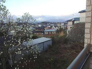 60歳になりました♪ 庭の半開きのモクレンの花も今日は全開しそうです(写真) 隣のサクラも1分咲 窓から見える近所の紅梅も