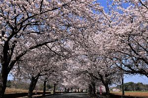 60歳になりました♪ 今日(3月29日)は、福祉施設敷地内の桜を観に行って来ました。 ここも桜祭りは未だに行われていません