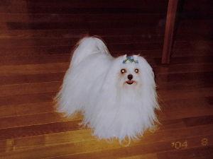 犬と鳥 とてもおしとやかなサラ。 長いドレス・・どうかしら。