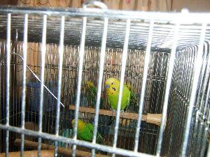 犬と鳥 よく映れてないけど、 我が家の鳥
