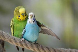 犬と鳥 初めに2羽  こんな色の組み合わせから、 生まれてきたのは、ほとんど緑でした。 青い鳥は一羽だけ、母