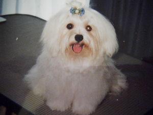 犬と鳥 の懐かしい写真を発見  おてんばエステルの小さい頃