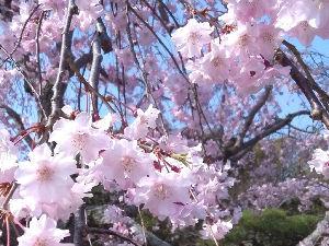 明石あたりの・・・(笑)Part.2 どうも皆様。こんにちは。(^^) もう暖かいというより暑いですね。 もう春が終わって初夏?ぐらいの感