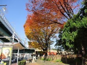 65歳になりますが、何か? おはようございます。  写真は昨日の名古屋は鶴舞公園前の紅葉