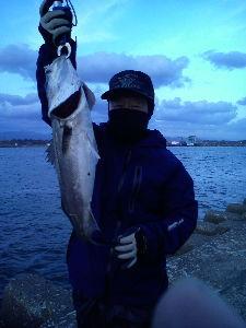 65歳になりますが、何か? 釣りですか (^^;) 一昨日今年始めてのスズキを釣りました。 しかし今日の風邪の寒さは覆面なくして