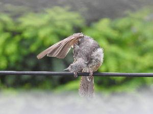 野 鳥 日 記 どこの 何を 見ている ? のかなぁ・・・