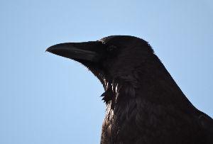 野 鳥 日 記 5時55分 ・・・