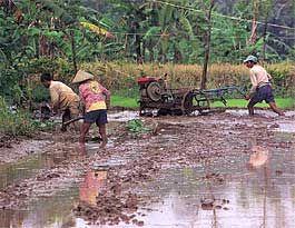 2388 - (株)ウェッジホールディングス 東南アジアで牛が、畑を耕す姿は消すだろう 過酷な労働から解放される農民は、寿命が延びるだろう 耕耘機