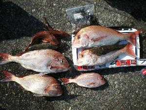 手漕ぎボート釣りの情報交換しませんか? こんにちは 5人の釣果 うち本日タイラバデビュウ1名は60.40とホウボウ2匹 私ホウボウ1匹のみ
