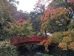 埼玉県北で登山仲間探してます(^^v こんばんは〜 熱海の紅葉🍁は、やはりちょっと早かったです。(汗)