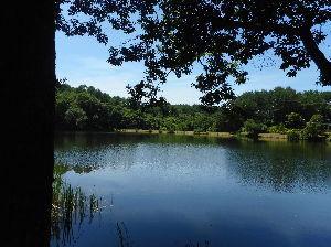 埼玉県北で登山仲間探してます(^^v 近くの竜神池は静かでお散歩コースにはとっくに終わってしまった 水芭蕉の葉っぱがわさわさと🎣しているオ
