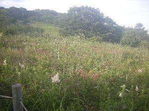 埼玉県北で登山仲間探してます(^^v 草原の様子です。 この風景は昔とあまり変わらないけど、残念ながら鹿柵の中です。(^^;