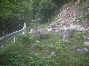 埼玉県北で登山仲間探してます(^^v 花は残念だったけど、アクセスに利用したこの林道は既に役割を終えて自然に還りつつあり良い雰囲気でした。