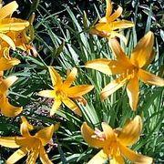 今、お庭に咲いてる花はなんでしょう?