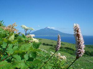 今、お庭に咲いてる花はなんでしょう? 暑いですが、湿気がなくさわやかです。 8月になり、庭に咲いてる花が、ダリアだけになってます。 礼文島