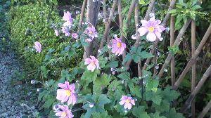 今、お庭に咲いてる花はなんでしょう? 3連休なのですが、ちょっと休日出勤しなければないらので実質2連休です。 良い天気です。洗車して昼ご飯