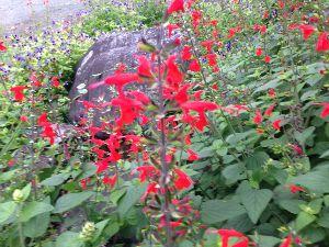 今、お庭に咲いてる花はなんでしょう? 朝が気持ち良くなってきたね この間UPしたキンギョソウ?の横には こんなのが(名前は知らんのぉ)群生