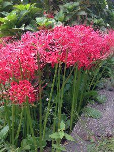 今、お庭に咲いてる花はなんでしょう? これが今らしい