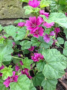 今、お庭に咲いてる花はなんでしょう? 日に日に涼しくなる朝です 夜の雨の振り方がこの頃変だなぁと 自分だけ感じてるのか なんだかムラに思え