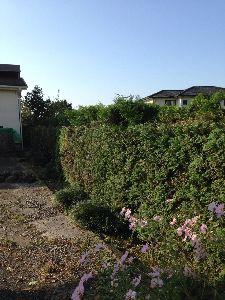 今、お庭に咲いてる花はなんでしょう? σ(^_^;)も奥日光好きです 遊びにはなかなか行けないけどね キンモクセイはホンの短期