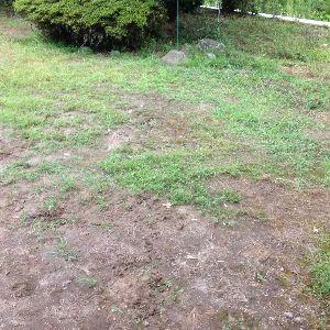 今の生活楽しい? こんにちは  実家は早めに行きました。 庭の草取りでした。草刈り機で刈りましたね。刈った草を燃えるゴ