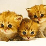 ~野良猫の集まり~